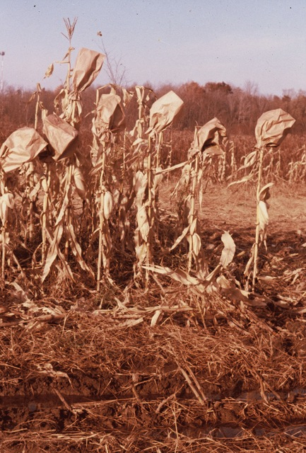 """""""Famine:  A Crop of People"""" Dzvinia Orlowsky"""